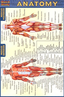Image of Anatomy : Laminated Quickstudy Guide Pocket