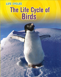 Image of Life Cycle Of Birds