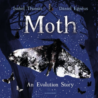 Image of Moth : An Evolution Story