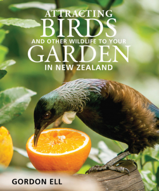 Image of Attracting Birds And Other Wildlife To Your Garden In New Zealand