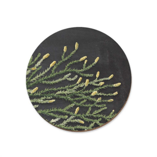 Image of Rimu Red Pine Coaster