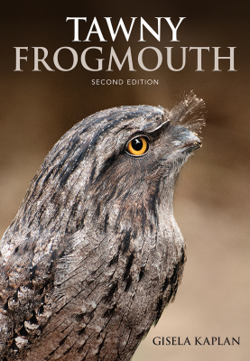 Image of Tawny Frogmouth