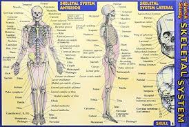 Image of Skeletal : Laminated Quickstudy Guide Pocket