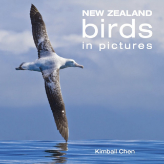 Image of New Zealand Birds In Pictures