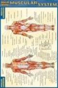 Image of Muscular System : Laminated Quickstudy Guide Pocket