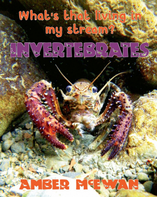 What's That Living In My Stream : Invertebrates