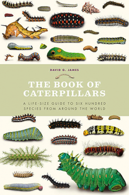 Image of The Book Of Caterpillars : A Life-size Guide To Six Hundred Species From Around The World