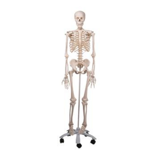 Image of Mr Plain Skeleton