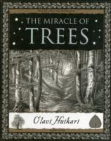 Image of Miracle Of Trees