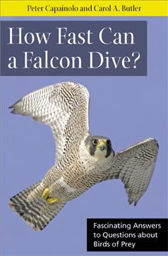 Image of How Fast Can A Falcon Dive : Fascinating Answers To Questions About Birds Of Prey