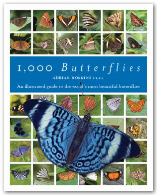 1000 Butterflies : An Illustrated Guide To The World's Most Beautiful Butterflies