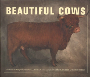 Image of Beautiful Cows