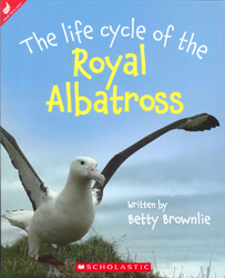 Image of The Life Cycle Of The Royal Albatross