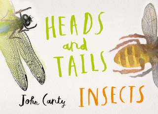 Image of Heads And Tails : Insects