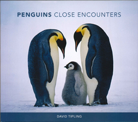Image of Penguins : Close Encounters
