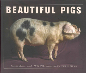 Image of Beautiful Pigs