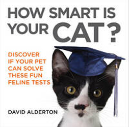 Image of How Smart Is Your Cat? Discover If Your Pet Can Solve These Fun Feline Tests