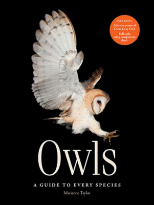 Image of Owls : A Guide To Every Species