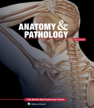 Image of Anatomy & Pathology : The World's Best Anatomical Charts Book
