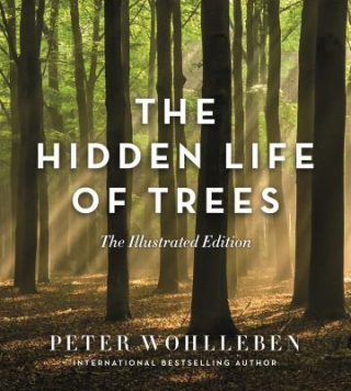 Image of The Hidden Life Of Trees : Illustrated Edition