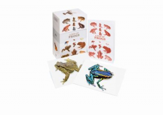 Image of Box Of Frogs : 100 Postcards Of The Most Striking Species