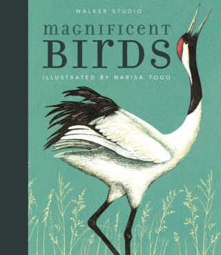 Image of Magnificent Birds