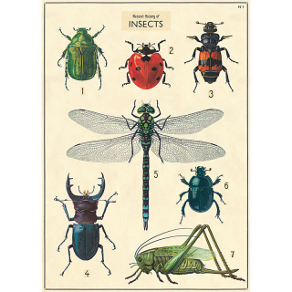 Image of Cavallini Insects : Wrapping Paper